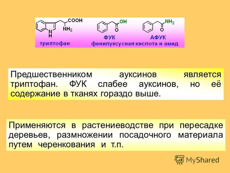 Применяются в растениеводстве при пересадке деревьев, размножении посадочного материала путем черенкования и т.п. Предшественником ауксинов является триптофан. ФУК слабее ауксинов, но её содержание в тканях гораздо выше.