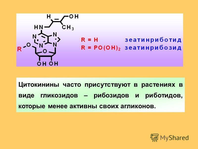 Цитокинины часто присутствуют в растениях в виде гликозидов – рибозидов и риботидов, которые менее активны своих агликонов.