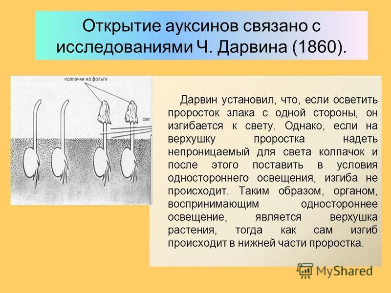 Открытие ауксинов связано с исследованиями Ч. Дарвина (1860). Дарвин установил, что, если осветить проросток злака с одной стороны, он изгибается к свету. Однако, если на верхушку проростка надеть непроницаемый для света колпачок и после этого постав