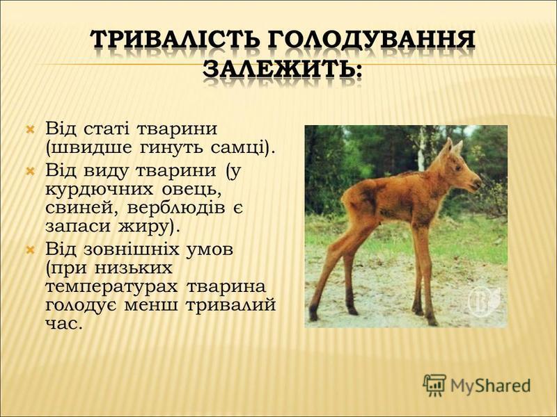 Від статі тварини (швидше гинуть самці). Від виду тварини (у курдючних овець, свиней, верблюдів є запаси жиру). Від зовнішніх умов (при низьких температурах тварина голодує менш тривалий час.