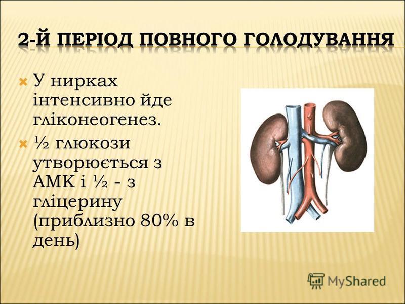 У нирках інтенсивно йде гліконеогенез. ½ глюкози утворюється з АМК і ½ - з гліцерину (приблизно 80% в день)