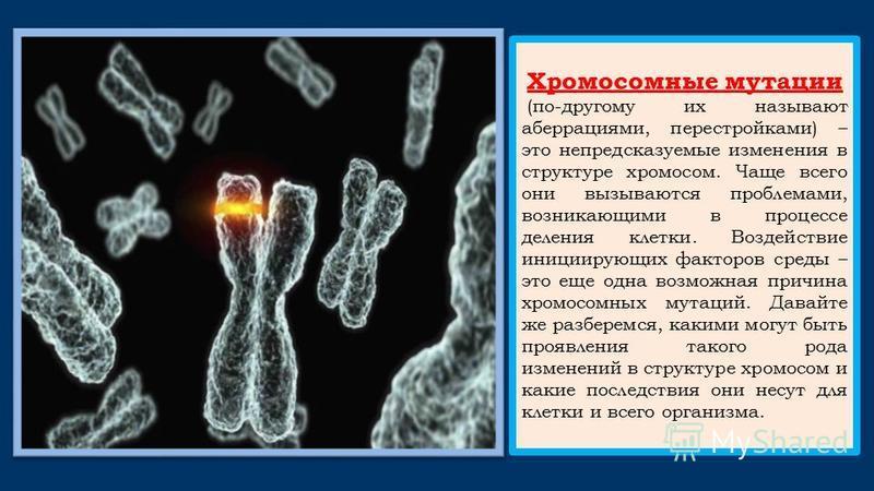 Хромосомные мутации (по-другому их называют аберрациями, перестройками) – это непредсказуемые изменения в структуре хромосом. Чаще всего они вызываются проблемами, возникающими в процессе деления клетки. Воздействие инициирующих факторов среды – это