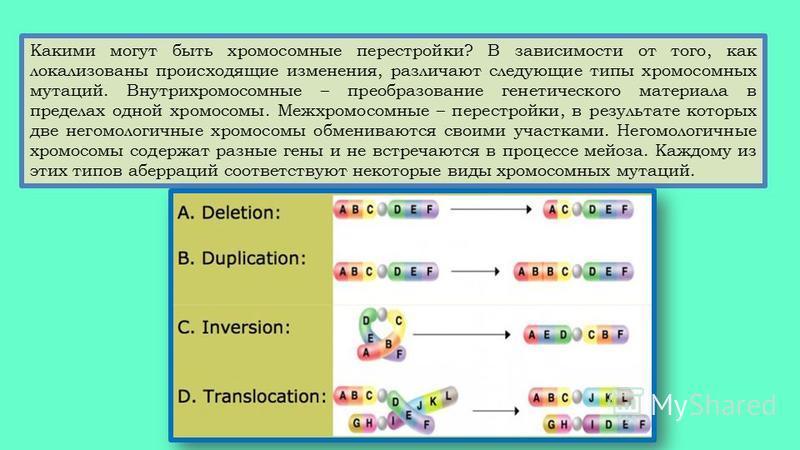 Какими могут быть хромосомные перестройки? В зависимости от того, как локализованы происходящие изменения, различают следующие типы хромосомных мутаций. Внутрихромосомные – преобразование генетического материала в пределах одной хромосомы. Межхромосо