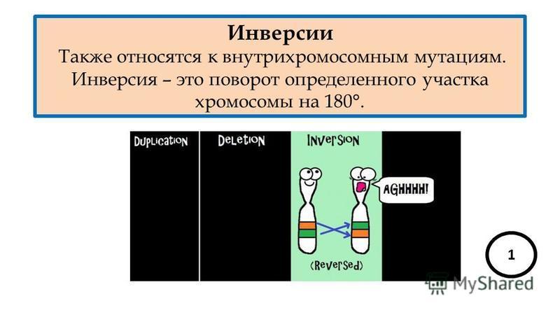 Инверсии Также относятся к внутрихромосомным мутациям. Инверсия – это поворот определенного участка хромосомы на 180°. 1
