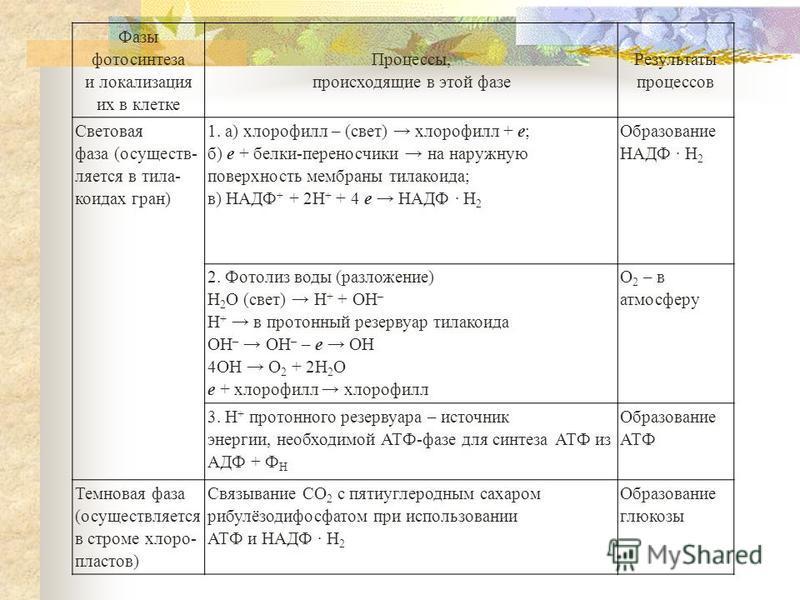 Фазы фотосинтеза и локализация их в клетке Процессы, происходящие в этой фазе Результаты процессов Световая фаза (осуществляется в тела- коидах гран) 1. а) хлорофилл – (свет) хлорофилл + е; б) е + белки-переносчики на наружную поверхность мембраны те