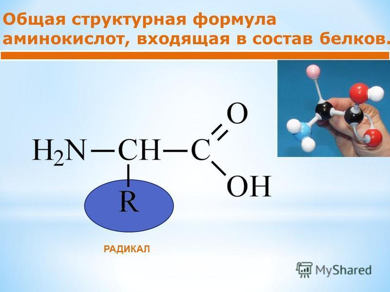 Общая структурная формула аминокислот, входящая в состав белков. РАДИКАЛ
