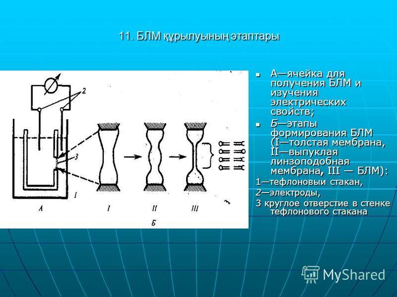 11. БЛМ құрылуының этаптары Аячейка для получения БЛМ и изучения электрических свойств; Аячейка для получения БЛМ и изучения электрических свойств; Бэтапы формирования БЛМ (Iтолстая мембрана, IIвыпуклая линзоподобная мембрана, III БЛМ): Бэтапы формир