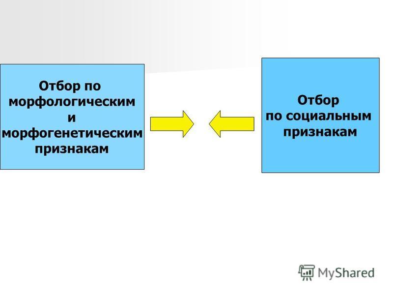 Отбор по морфологическим и морфогенетическим признакам Отбор по социальным признакам