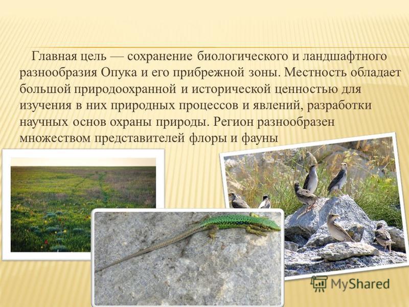 Главная цель сохранение биологического и ландшафтного разнообразия Опука и его прибрежной зоны. Местность обладает большой природоохранной и исторической ценностью для изучения в них природных процессов и явлений, разработки научных основ охраны прир