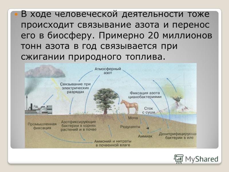 В ходе человеческой деятельности тоже происходит связывание азота и перенос его в биосферу. Примерно 20 миллионов тонн азота в год связывается при сжигании природного топлива.
