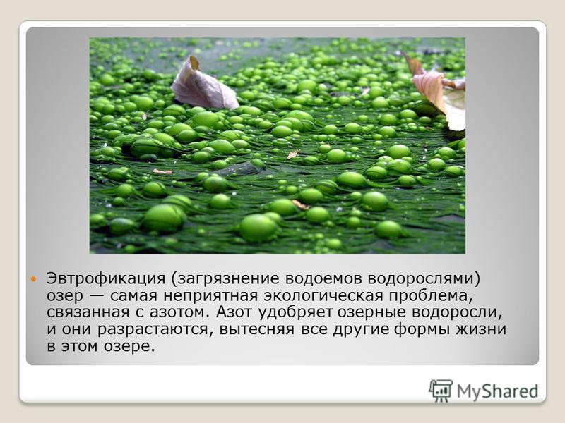 Эвтрофикация (загрязнение водоемов водорослями) озер самая неприятная экологическая проблема, связанная с азотом. Азот удобряет озерные водоросли, и они разрастаются, вытесняя все другие формы жизни в этом озере.