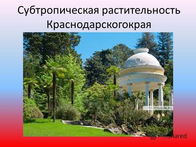 Субтропическая растительность Краснодарскогокрая