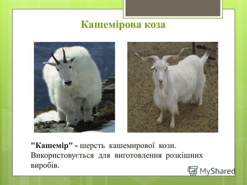 Кашемірова коза Кашемір - шерсть кашемирової кози. Використовується для виготовлення розкішних виробів.