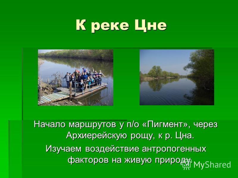 К реке Цне Начало маршрутов у п/о «Пигмент», через Архиерейскую рощу, к р. Цна. Изучаем воздействие антропогенных факторов на живую природу.