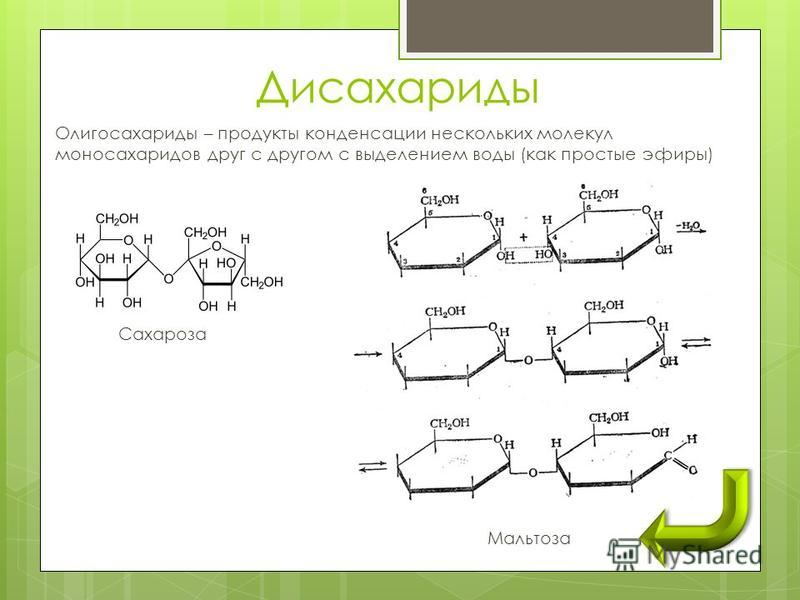 Олигосахариды – продукты конденсации нескольких молекул моносахаридов друг с другом с выделением воды (как простые эфиры) Сахароза Мальтоза Дисахариды