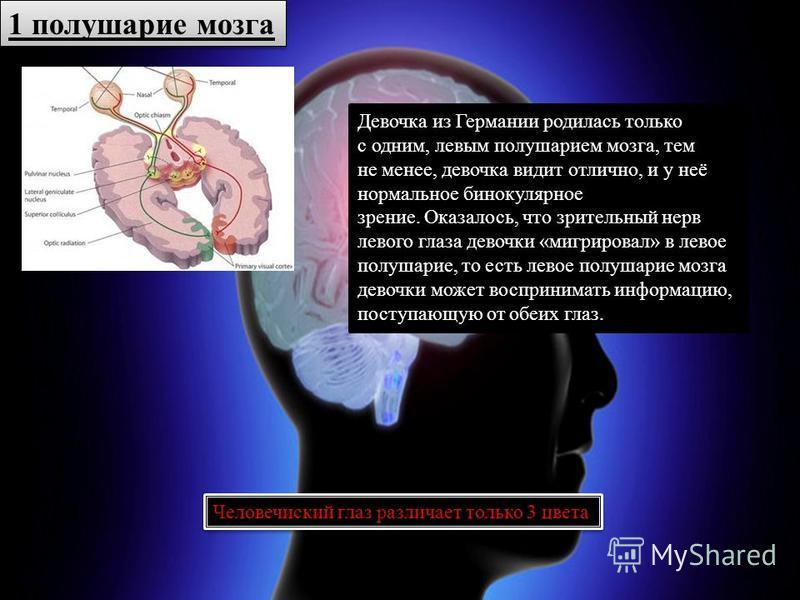 1 полушарие мозга Девочка из Германии родилась только с одним, левым полушарием мозга, тем не менее, девочка видит отлично, и у неё нормальное бинокулярное зрение. Оказалось, что зрительный нерв левого глаза девочки «мигрировал» в левое полушарие, то