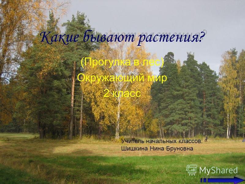 Какие бывают растения? (Прогулка в лес) Окружающий мир 2 класс Учитель начальных классов: Шишкина Нина Бруновна