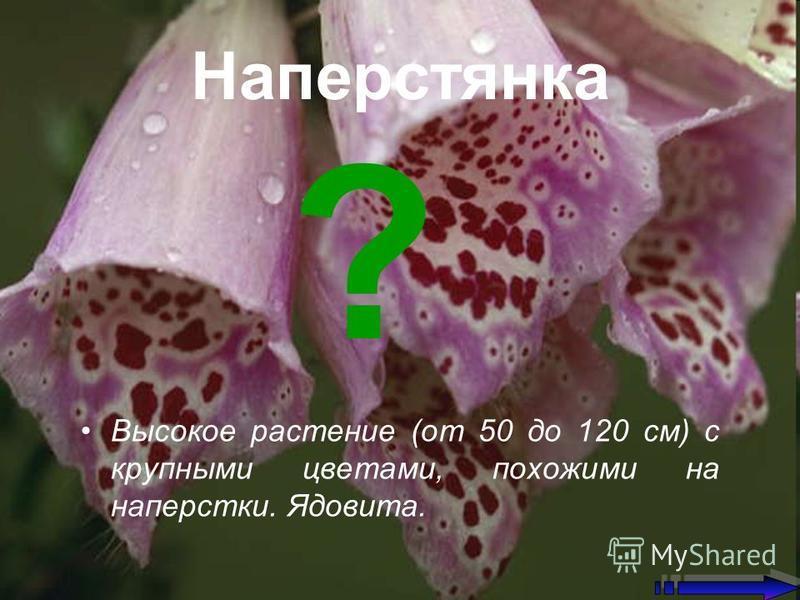 Наперстянка Высокое растение (от 50 до 120 см) с крупными цветами, похожими на наперстки. Ядовита. ?