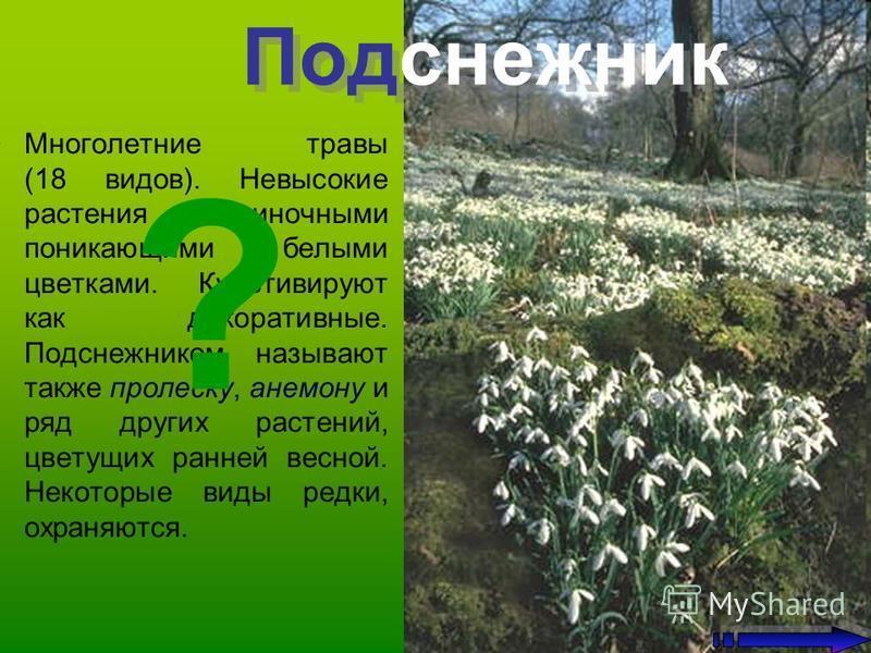 Многолетние травы (18 видов). Невысокие растения с одиночными поникающими белыми цветками. Культивируют как декоративные. Подснежником называют также пролеску, анемону и ряд других растений, цветущих ранней весной. Некоторые виды редки, охраняются. П