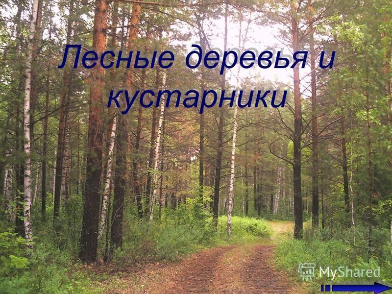 Лесные деревья и кустарники Лесные деревья и кустарники