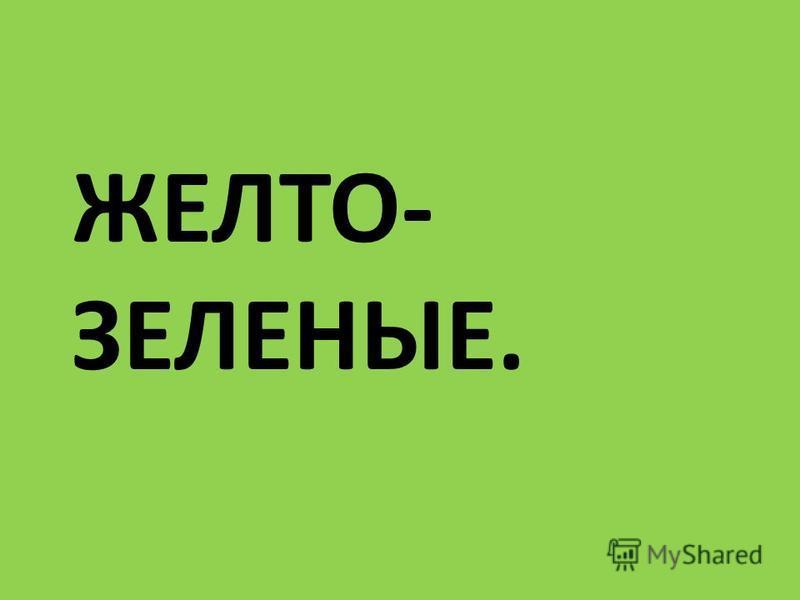 ЖЕЛТО- ЗЕЛЕНЫЕ.