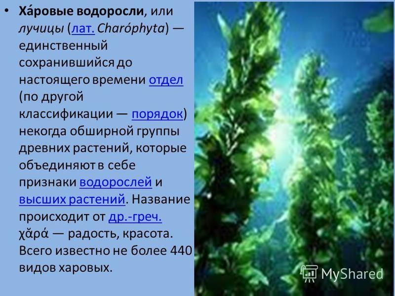 Ха́новые водоросли, или лучицы (лат. Charóphyta) единственный сохранившийся до настоящего времени отдел (по другой классификации порядок) некогда обширной группы древних растений, которые объединяют в себе признаки водорослей и высших растений. Назва