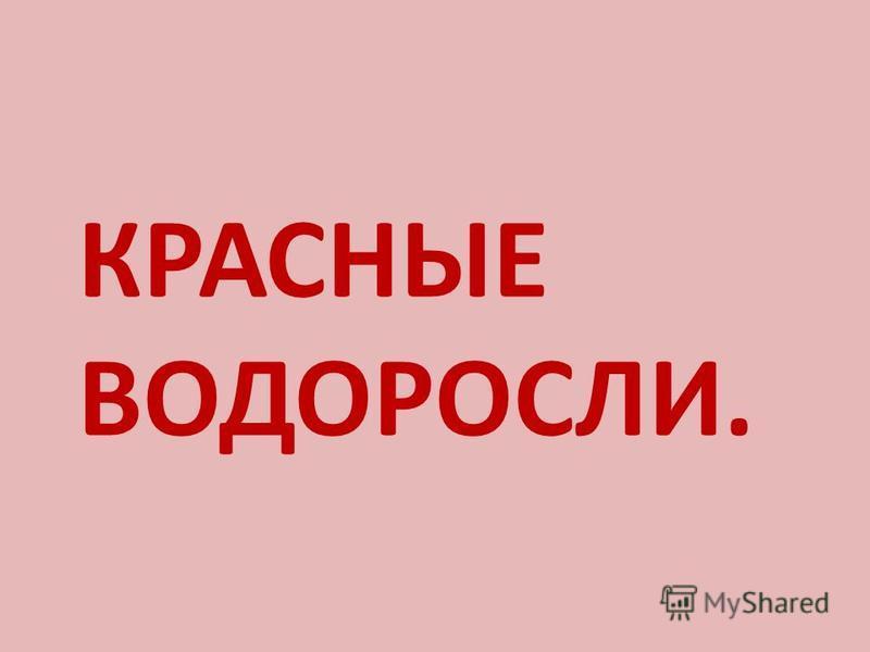 КРАСНЫЕ ВОДОРОСЛИ.