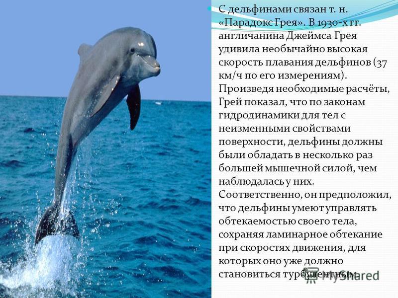 С дельфинами связан т. н. «Парадокс Грея». В 1930-х гг. англичанина Джеймса Грея удивила необычайно высокая скорость плавания дельфинов (37 км/ч по его измерениям). Произведя необходимые расчёты, Грей показал, что по законам гидродинамики для тел с н