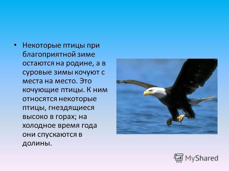 Некоторые птицы при благоприятной зиме остаются на родине, а в суровые зимы кочуют с места на место. Это кочующие птицы. К ним относятся некоторые птицы, гнездящиеся высоко в горах; на холодное время года они спускаются в долины.