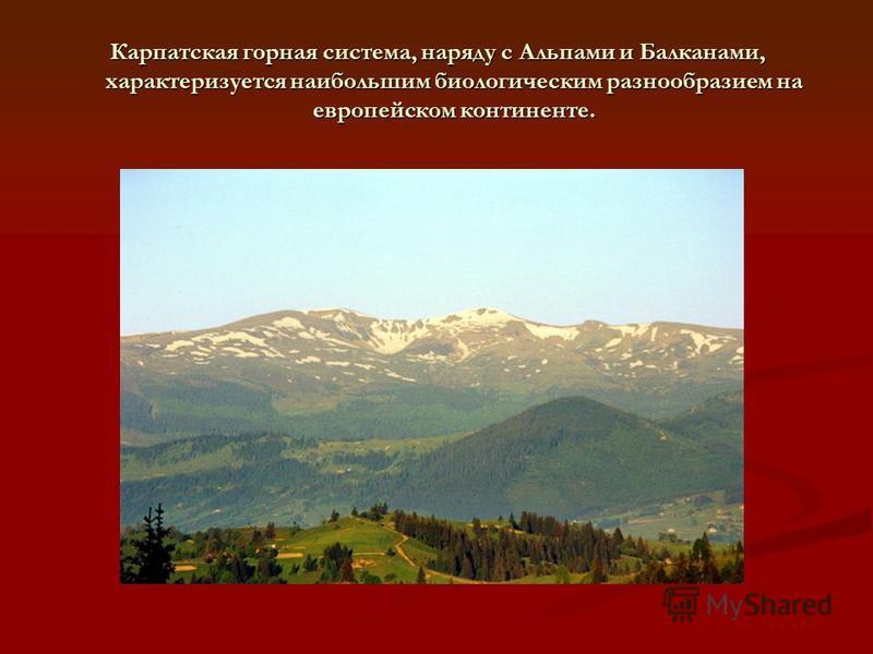 Карпатская горная система, наряду с Альпами и Балканами, характеризуется наибольшим биологическим разнообразием на европейском континенте.