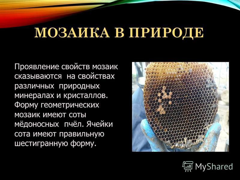МОЗАИКА В ПРИРОДЕ Проявление свойств мозаик сказываются на свойствах различных природных минералах и кристаллов. Форму геометрических мозаик имеют соты мёдоносных пчёл. Ячейки сота имеют правильную шестигранную форму.