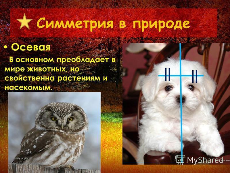 Симметрия в природе Осевая В основном преобладает в мире животных, но свойственна растениям и насекомым.