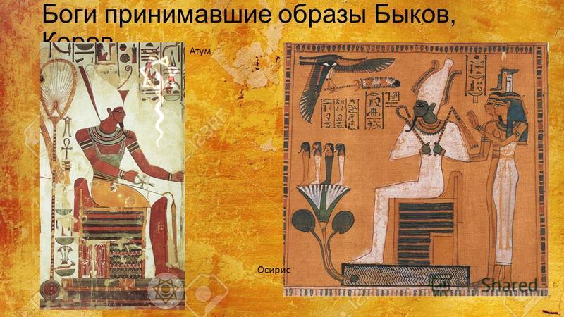 Боги принимавшие образы Быков, Коров Атум Осирис