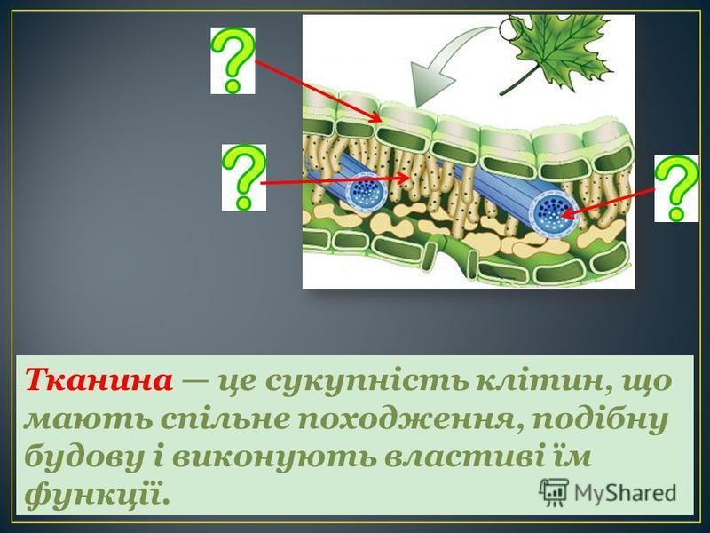 Тканина це сукупність клітин, що мають спільне походження, подібну будову і виконують властиві їм функції.