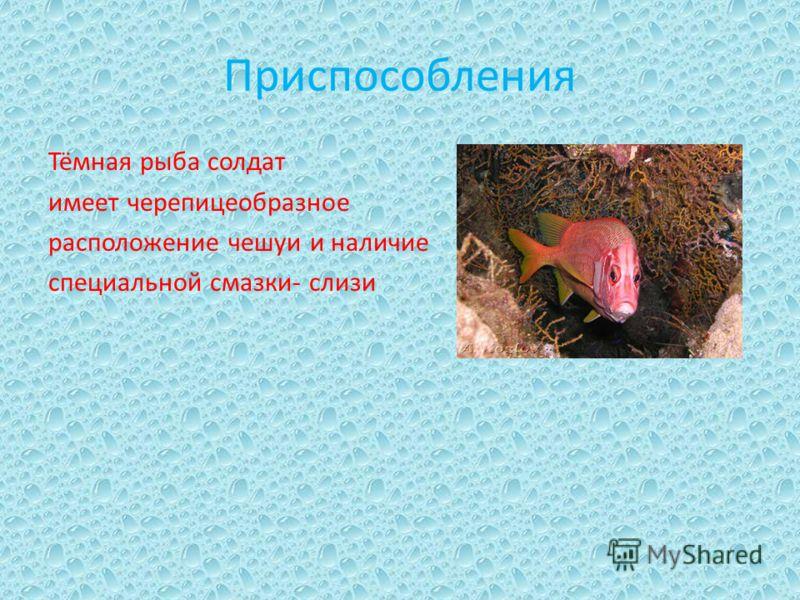 Приспособления Тёмная рыба солдат имеет черепицеобразное расположение чешуи и наличие специальной смазки- слизи