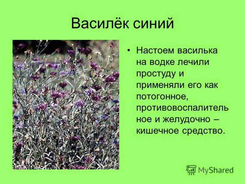 Василёк синий Настоем василька на водке лечили простуду и применяли его как потогонное, противовоспалитель ное и желудочно – кишечное средство.