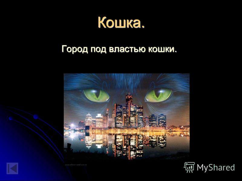Кремль. Вид Московского Кремля на рассвете. Вид Московского Кремля на рассвете.