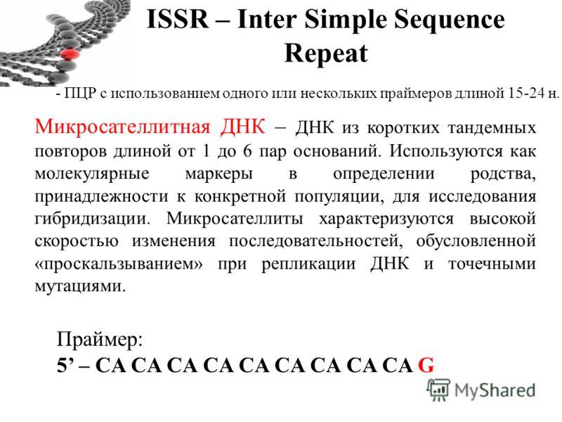 ISSR – Inter Simple Sequence Repeat - ПЦР с использованием одного или нескольких праймеров длиной 15-24 н. Микросателлитная ДНК – ДНК из коротких тандемных повторов длиной от 1 до 6 пар оснований. Используются как молекулярные маркеры в определении р