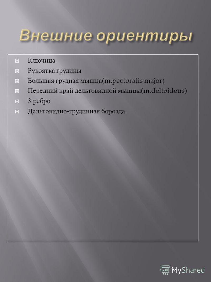 Ключица Рукоятка грудины Большая грудная мышца (m.pectoralis major) Передний край дельтовидной мышцы (m.deltoideus) 3 ребро Дельтовидно - грудинная борозда
