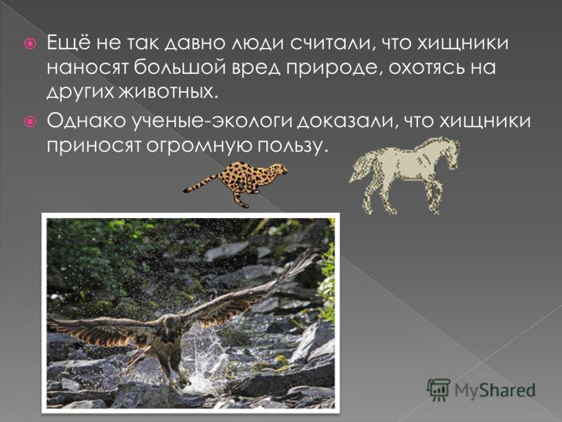 Ещё не так давно люди считали, что хищники наносят большой вред природе, охотясь на других животных. Однако ученые-экологи доказали, что хищники приносят огромную пользу.