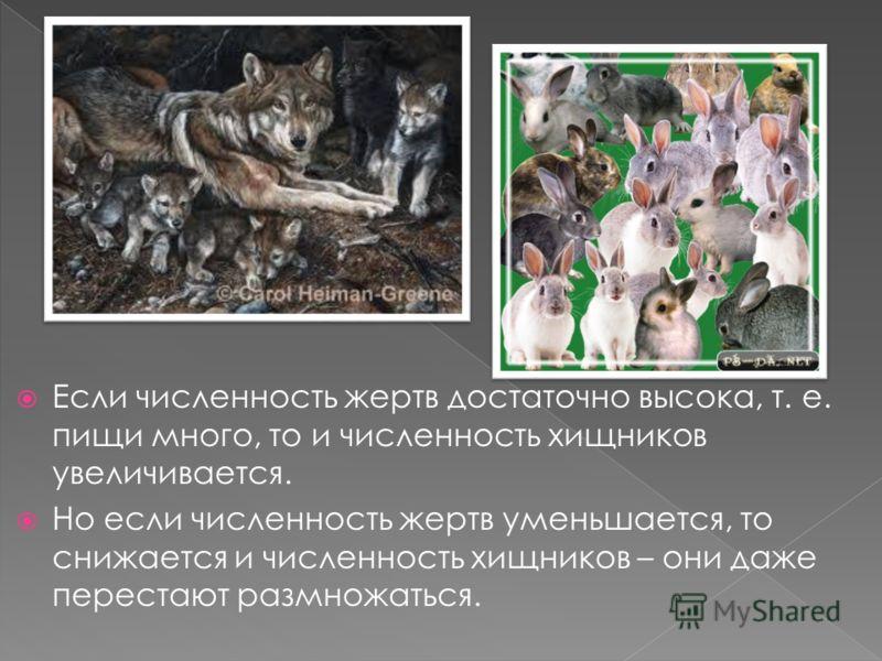 Если численность жертв достаточно высока, т. е. пищи много, то и численность хищников увеличивается. Но если численность жертв уменьшается, то снижается и численность хищников – они даже перестают размножаться.