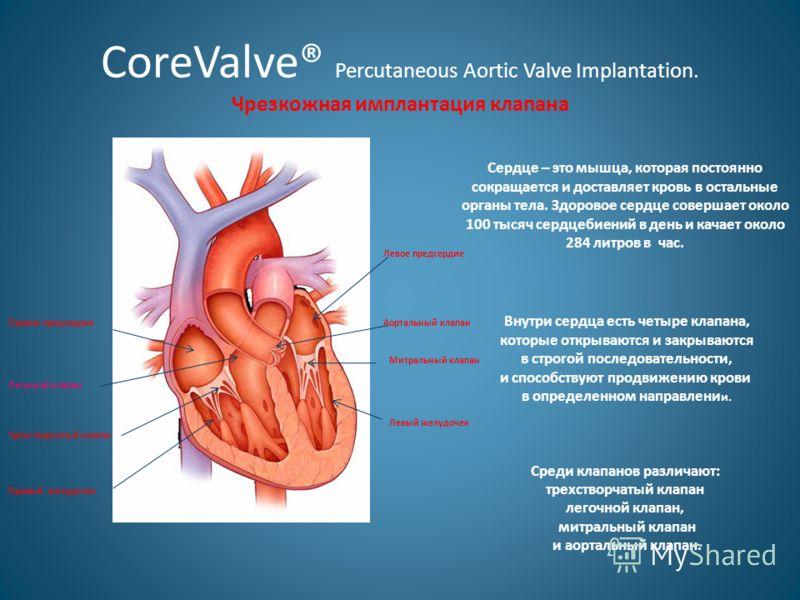 CoreValve® Percutaneous Aortic Valve Implantation. Чрезкожная имплантация клапана Правое предсердие Левое предсердие Аортальный клапан Митральный клапан Левый желудочек Правый желудочек Трёхстворчатый клапан Легочной клапан Сердце – это мышца, котора