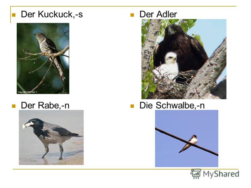 Der Kuckuck,-s Der Rabe,-n Der Adler Die Schwalbe,-n