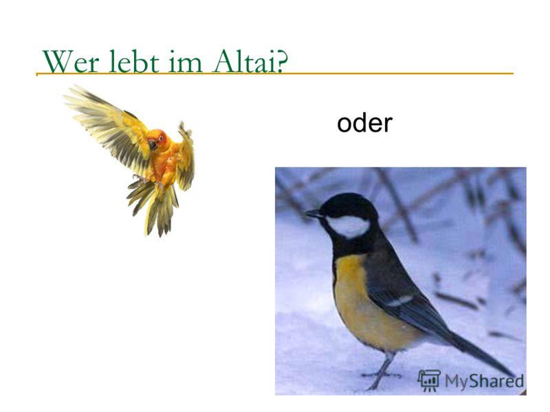 Wer lebt im Altai? oder