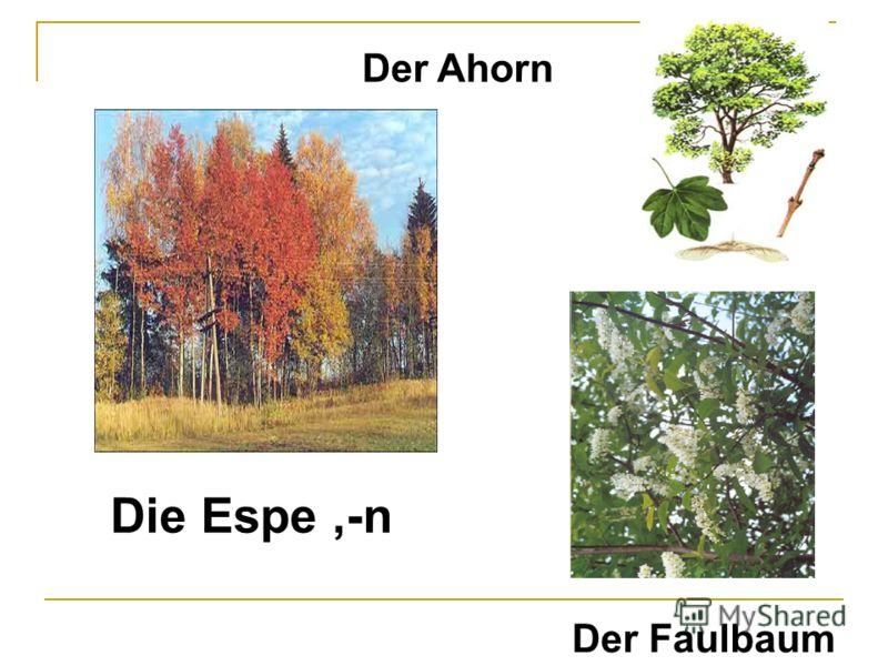 Die Espe,-n Der Faulbaum Der Ahorn