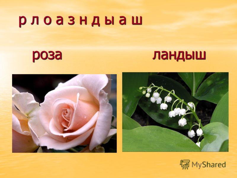 р л о а з н д ы а ш роза ландыш
