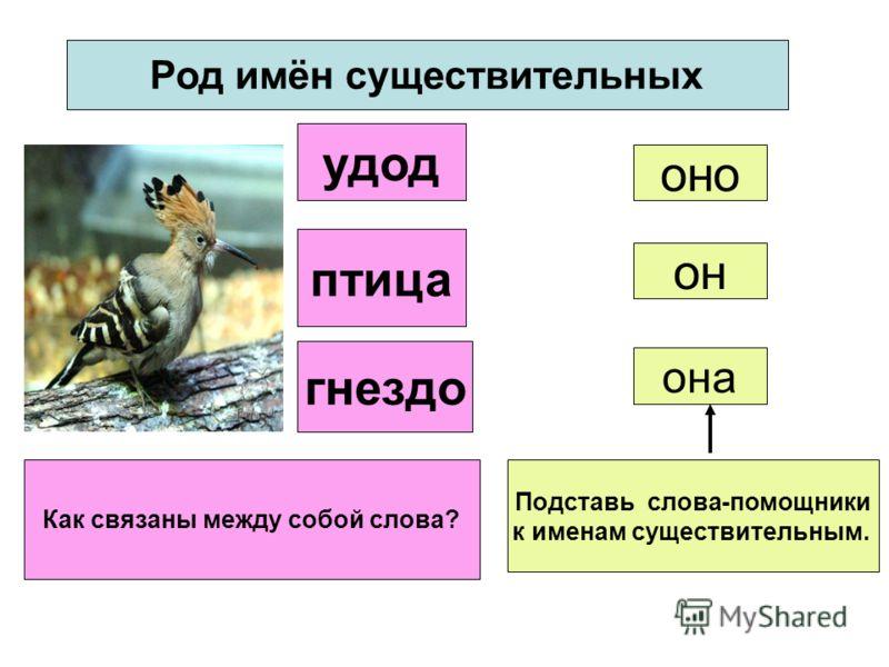 Род имён существительных удод птица гнездо он она оно Как связаны между собой слова? Подставь слова-помощники к именам существительным. птица