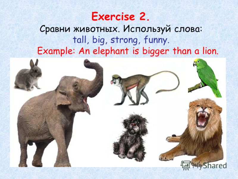 Exercise 2. Сравни животных. Используй слова: tall, big, strong, funny. Example: An elephant is bigger than a lion.