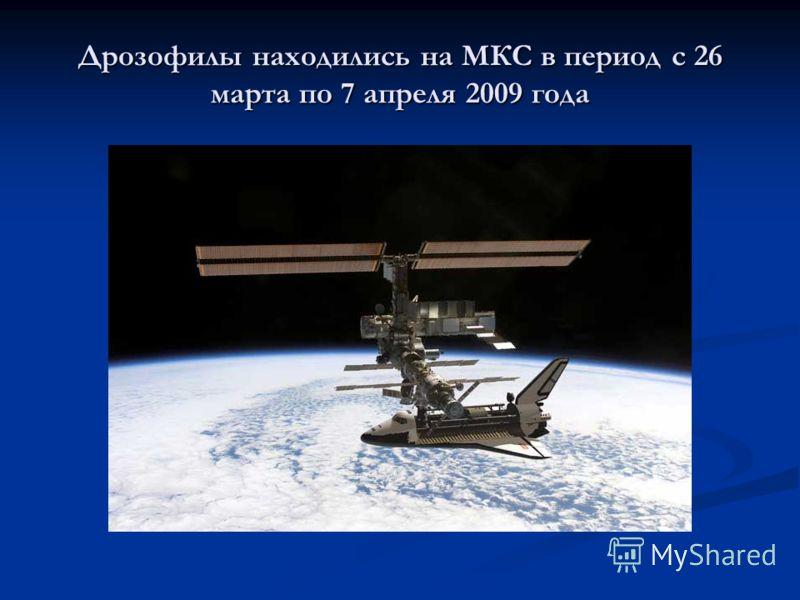Дрозофилы находились на МКС в период с 26 марта по 7 апреля 2009 года