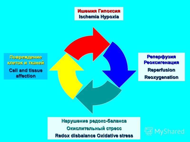 Ишемия Гипоксия Ischemia Hypoxia Реперфузия Реоксигенация ReperfusionReoxygenation Повреждение клеток и тканей Cell and tissue affection Нарушение редокс-баланса Окислительный стресс Redox disbalance Oxidative stress